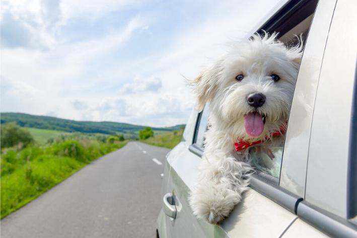 viajando con el perro